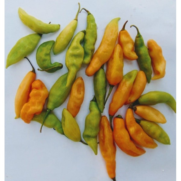 Habanero pepper (100g)
