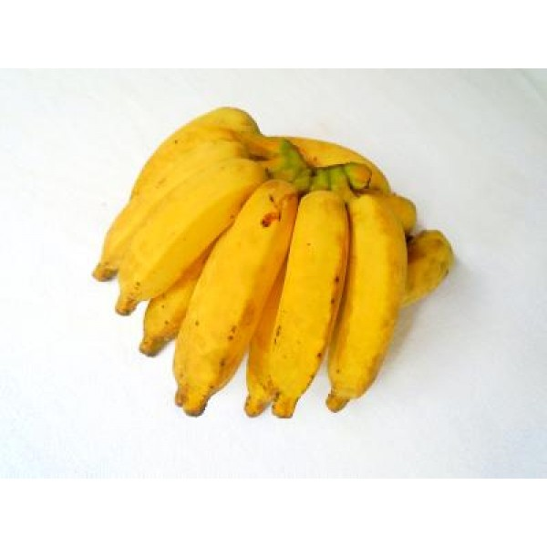 Burro banana (palm)