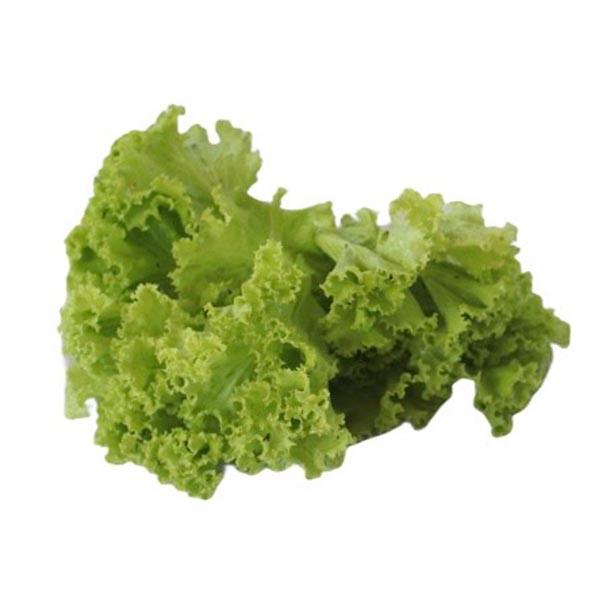 Lettuce (pack)
