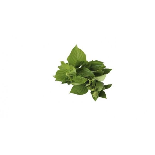 Large Leaf Basil (pack)